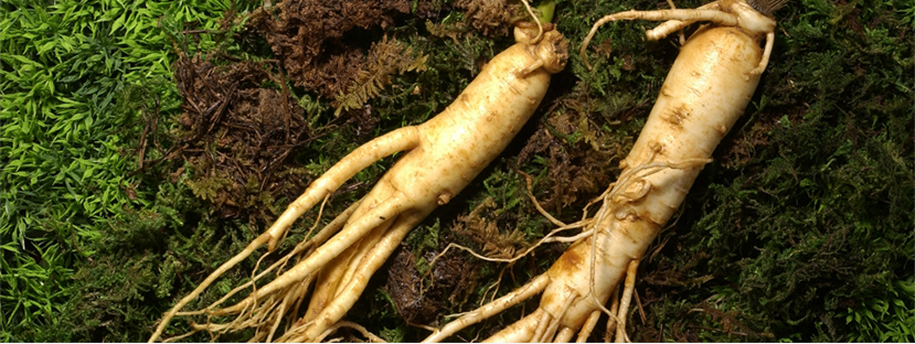 Ganghwa Ginseng photo